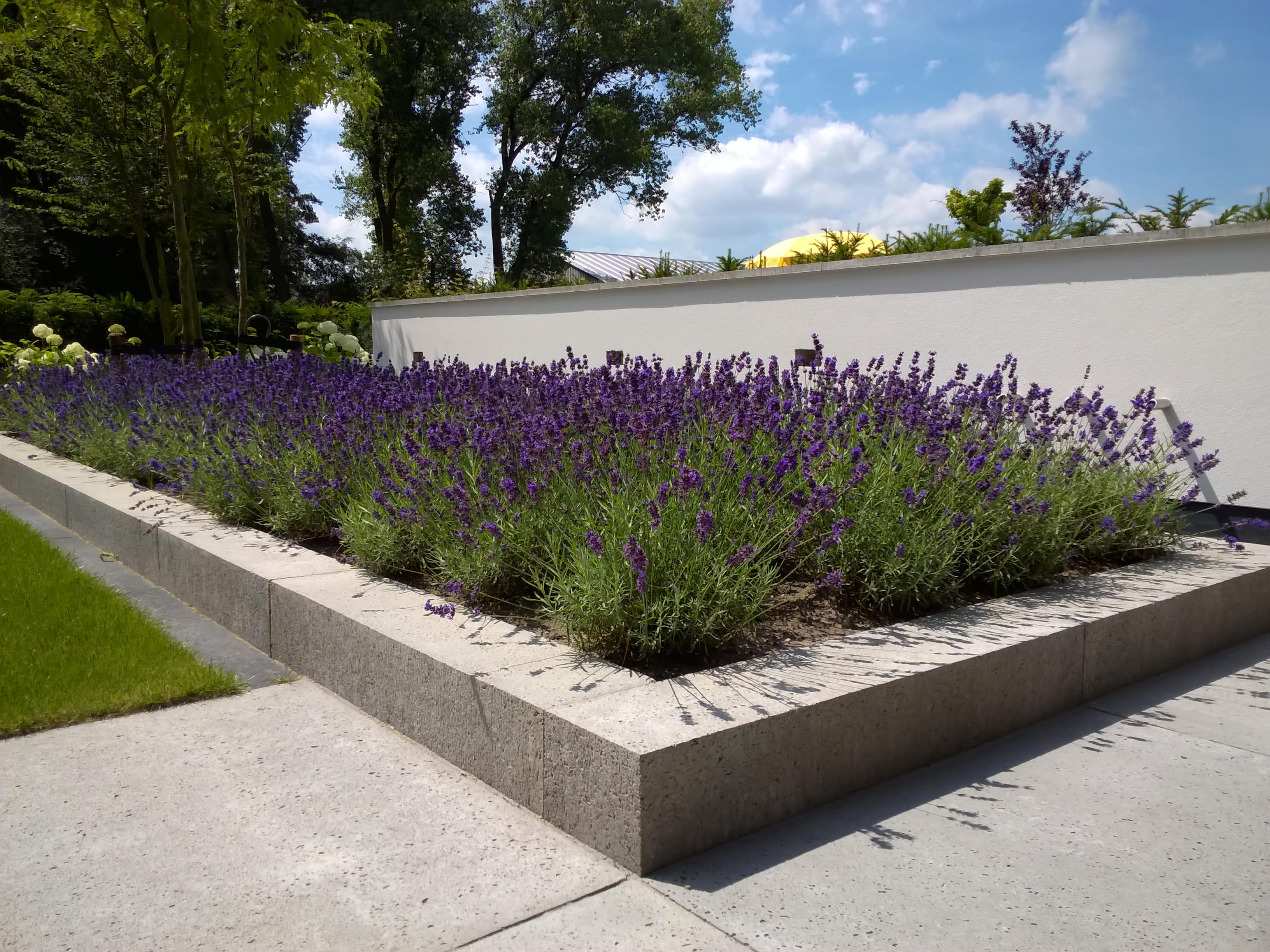 Moderne tuin met water element u2013 richard bertens groenprojecten